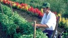 Center for Food Safety   Blog   The DARK Act: Denying Our Right to Know and Our Farmers to Grow