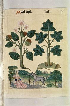 the tudor pattern book - Google Search