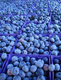 blueberry fields forever