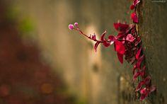 Kwitnąca, Roślina, Makro