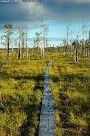 suomen kansallismaisema - Google-haku Finland, Hiking, Country Roads, Google, Nature, Walks, Naturaleza, Trekking, Nature Illustration