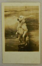AZO RPPC Postcard Begging Dog My dog Moe did and looked like this.