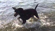 Blitz badar för första gången