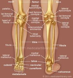 What is a good thing to write about the human knee or foot?