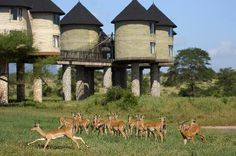 In case of going to Safari in Kenya, Salt Lick Game Lodge