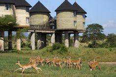 Sarova Salt Lick Game Lodge. Tsavo National Park West, Kenya.