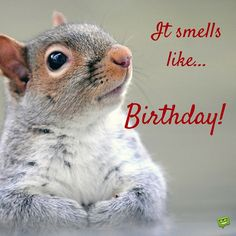 Our collection of happy birthday pictures can be a source of inspiration for your own wishes and an affectionate introduction to a friend's special day. Happy Birthday Squirrel, Happy Birthday Meme, Happy Birthday Pictures, Birthday Fun, Birthday Quotes, Birthday Music, Birthday Ideas, Birthday Greetings For Facebook, Birthday Messages