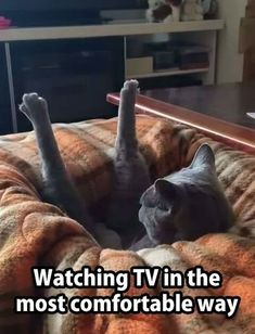 Click the Photo For More FUNNY and Cute Cat Videos and Photos #cutecats #cats #kittens #catvideos #funnycats