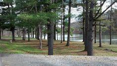 North Park Lake - Allegheny County, PA  (Nov. 2012)
