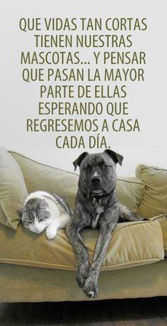 Que vidas tan cortas tienen nuestras mascotas…