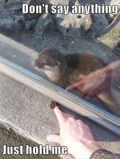 Funny pictures about I Want To Hold Hands With An Otter Too. Oh, and cool pics about I Want To Hold Hands With An Otter Too. Also, I Want To Hold Hands With An Otter Too photos. Animal Jokes, Funny Animal Memes, Funny Animal Pictures, Cute Pictures, Funny Memes, Memes Humor, Funniest Memes, Cat Memes, Funny Humour