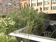 Autumn Moor Grasses at the High Line
