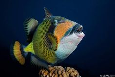 "Good Morning Scuba Divers ツ ""Life is Good"" with www.akdenizscuba.com #akdeniscuba #dive #diving #scuba #scubadiving #discovery #dalış #padi #cmas #tssf #freediving #life #lifestyle #lifeisgood #photographer #underwater #ok #adana #mersin #turkey #türkiye #antalya #gaziantep #hatay #instructor #iskenderun #dalisnoktam #ocean #sea #love #instructor by akdenizscuba"