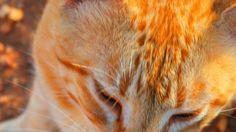 #Gato #Felino #Cat
