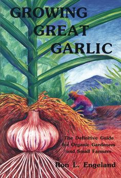 Garlic is good for your lungs and your circulation. Alsways have plenty of it around. Growing Great Garlic: The Definitive Guide for Organic Gardeners and Small Farmers/Ron L. Organic Vegetables, Growing Vegetables, Organic Insecticide, Organic Gardening Tips, Vegetable Gardening, Veggie Gardens, Organic Farming, Farm Gardens, Edible Garden
