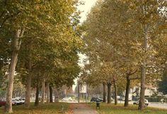Viale di C/so Cincinnato in autunno