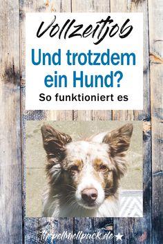 Hund und Job - geht das? Wie lange können Hunde allein zuhause bleiben? So funktioniert es bei uns mit Vollzeitjob und zwei Hunden | Hund | Haltung | Training | thepellmellpack.de