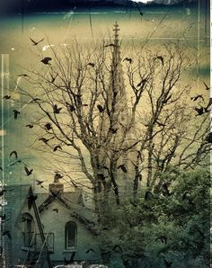 'The City Crows' by Gothicolors With Crows