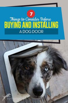 Whether you've got a pup that's extremely active or one who loves to drink lots of water and needs frequent bathroom breaks, the idea of a dog door starts to sound pretty appealing when you consider the benefits. Diy Doggie Door, Pet Door, Sliding Glass Dog Door, Glass Door, Best Dog Door, Training Your Dog, Leash Training, Dog Anxiety, Pets 3