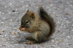 Animal, squirrel, baby