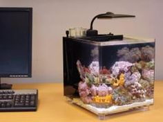 We have a great range of fish tanks for sale ranging from small nano tanks up to large marine aquariums.   Visit our site at http://www.buysellfish.co.uk/business_listings/accessories-ct/fish-tanks-sc/ to see the full range of assorted fish tanks on offer.