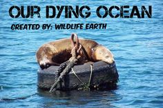 The cover picture for the group board Our Dying Ocean! Join to create awareness today! - Wildlife Earth