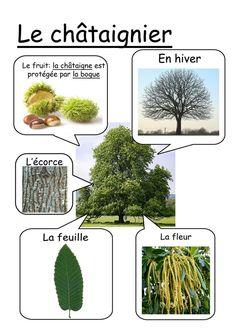 - Science and Nature Fall Preschool, Preschool Science, Montessori Materials, Montessori Activities, Tree Study, Primary Science, French Education, Nature Table, Autumn Nature