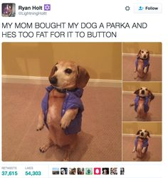 And this fashion forward pup that didn't ask for any of this.   19 Pictures That Will Make You So Goddamn Grateful For Twitter