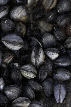 #black #mussels. THE VERY NATURE OF BLACK