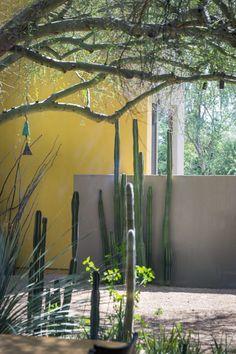 Monty Don's new book - American Gardens