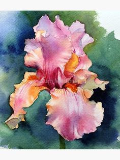 Iris Painting, Oil Painting Flowers, Watercolor Flowers, Painting & Drawing, Watercolor Paintings, Watercolors, Floral Paintings, Art Floral, Illustration Blume