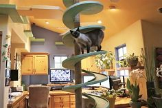 Man Turns His House Into Indoor Cat Playland - A builder from California, who clearly has a massive love of cats, has turned his entire house into the perfect feline playground.