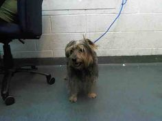SAFE --- OSCAR (A1668023) I am a male black and brown Yorkshire Terrier mix. The shelter staff think I am about 4 years old. I was found as a stray and I may be available for adoption on 12/28/2014. — Miami Dade County Animal Services. https://www.facebook.com/urgentdogsofmiami/photos/pb.191859757515102.-2207520000.1419459548./892881097412961/?type=3&theater