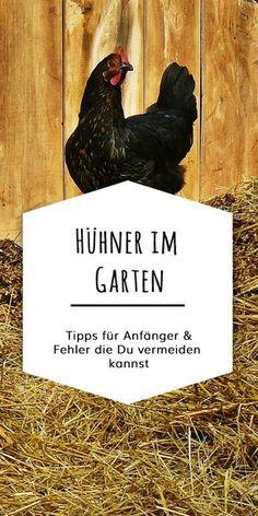 Auf was Du achten musst, wenn Du Hühner im Garten halten willst. Anfängerfehler und Tipps.