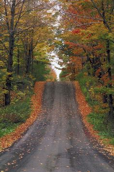 One of my favorite activities: Driving/winding down roads off the beaten path and admiring the fall foliage. Preferably with a coffee in hand.