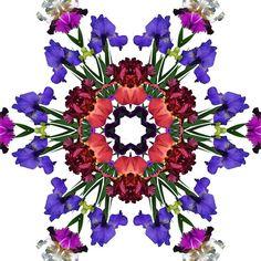 Iris mandala 2 fine art print giclee print by RVJamesDesigns, $15.00
