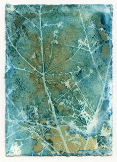 Unit 3 cyanotype print on handmade paper photography cyanotype photographic print scratches blueprint sunprint nature botanical photography plants landscape malvernweather Image collections