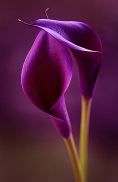 Purple flower. Tattoo? love the flower would change the color to pink