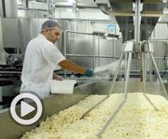 Image result for fromagerie des basques inc  Comment se fait le meilleur fromage en grains du Québec A TROIS-PISTOLE CANADA