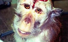 Alex Salmond: Ban ALL Animal Testing | Please SIGN and share petition. Thanks.