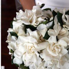 Gardenia bouquet.