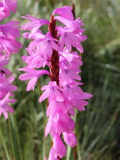 Posts about ground orchid written by Midlands Conservancies Forum