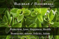 Marjoram : Protection, Love, Happiness, Health // Maggiorana: Protezione, Amore, Felicità, Salute | L'antro della magia http://antrodellamagia.forumfree.it/?t=56624342