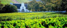 Cape Town Winelands #capetown #seyahat #tatil #gezi #winelands #travel