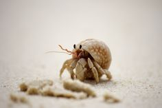 """Photograph    """"Going somewhere""""    by Marco  Leite on 500px      [Hermit Crab in Thailand]"""