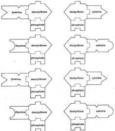 DNATemplates