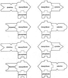 DNA/RNA template Biology lessons, Teaching biology