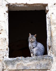 The cat on the window