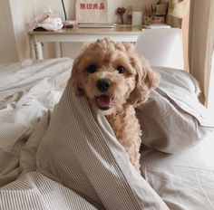 Fantastic cute dogs tips are offered on our web pages. Take a look and you wont be sorry you did. Cute Baby Dogs, Cute Dogs And Puppies, I Love Dogs, Doggies, Cute Dog Beds, Tiny Puppies, Silly Dogs, Adorable Puppies, Funny Dogs