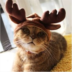AUCH New/Cute Fashion Colorful Pet Dog/Cat Hat Classics C... https://smile.amazon.com/dp/B012C00SJI/ref=cm_sw_r_pi_dp_x_RWLLybWHC2H35